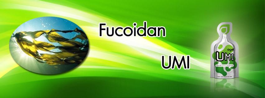 fucoidan-umi-1